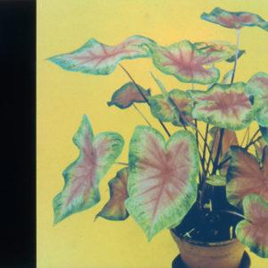 Unterricht in der Botanik # 2   Robert Wevers