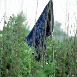 blue flag | Robert Wevers
