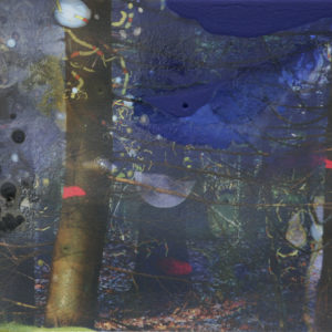 gemarkeerde bomen | Robert Wevers