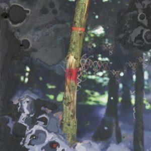 gemarkeerde boom | Robert Wevers