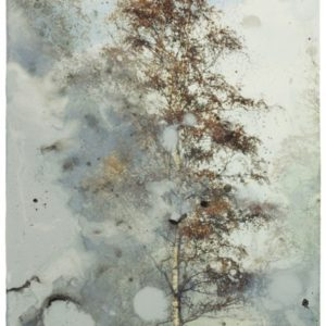 birch | Robert Wevers