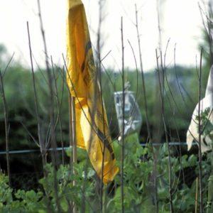 orange flag | Robert Wevers